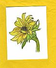 Sunflower GF_053